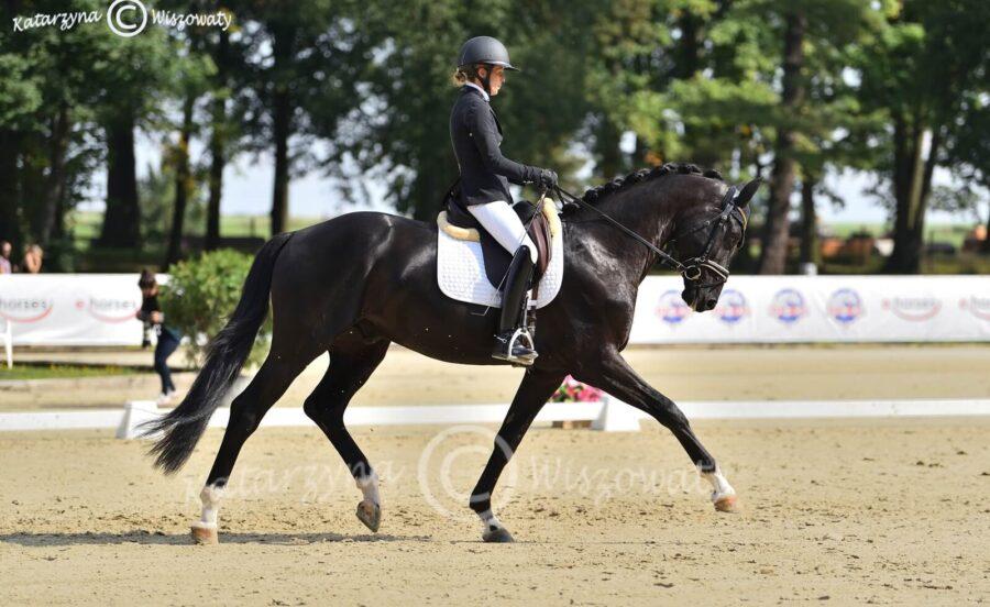 Romeo van Fuerstenball sp (Fuerstenball x Bretton Woods KWPN) - Aleksandra Szulc
