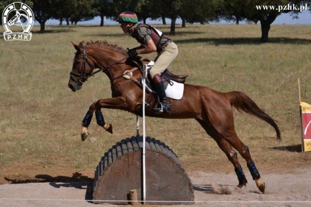 Żródło: www.equitacao.com