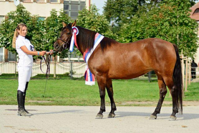 Międzynarodowy Czempionat Hodowlany koni rasy huculskiej