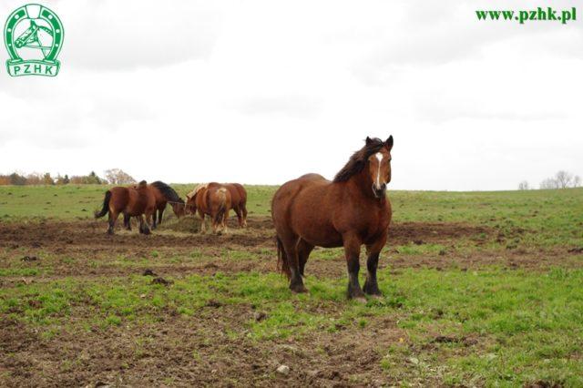 Konie napastwisku