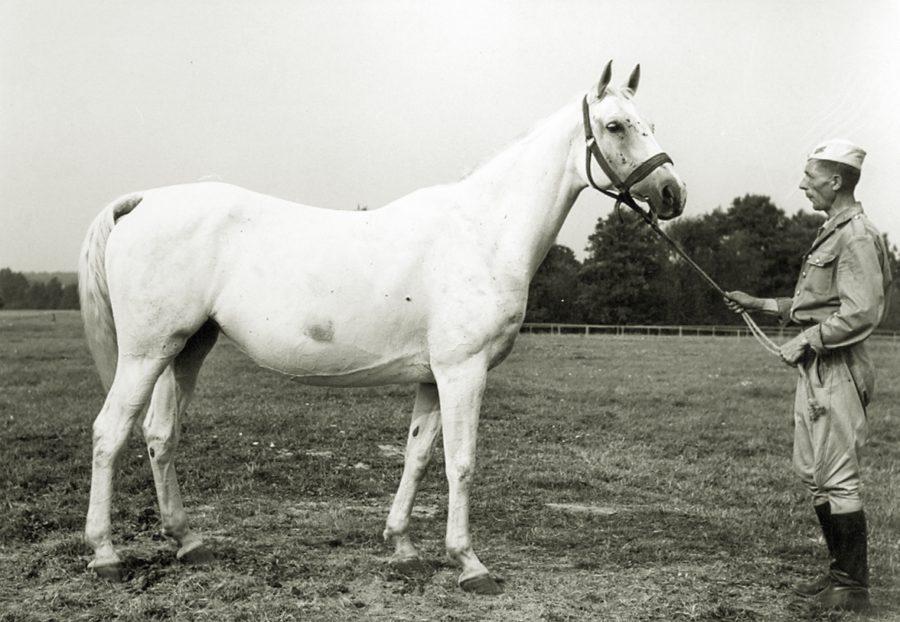 kl. Algeria xo, ur. 1959