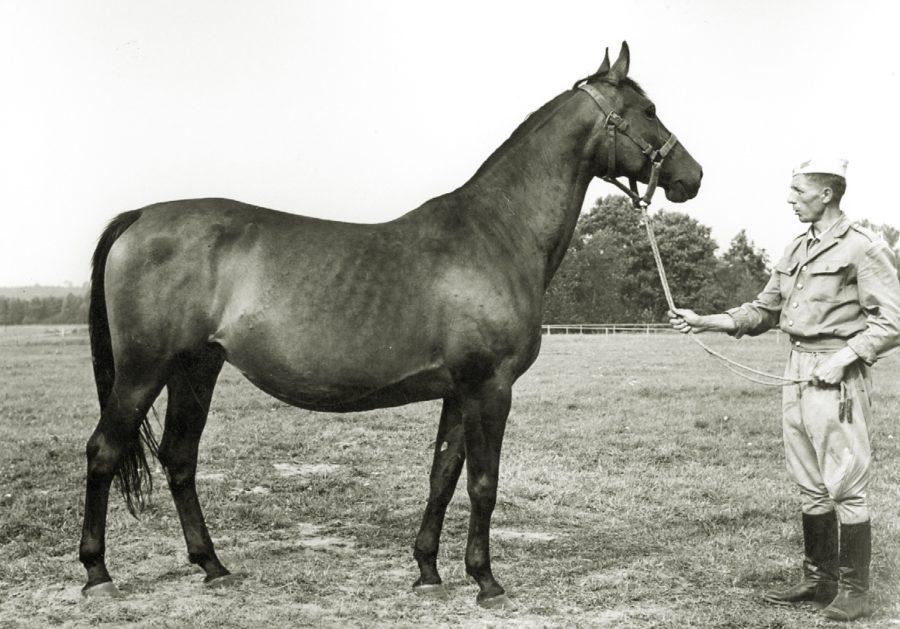 kl. Artema xo, ur. 1957