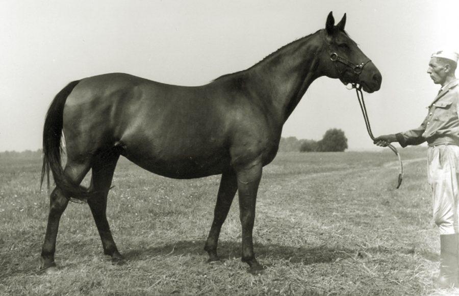 kl. Artemiza xo, ur. 1956