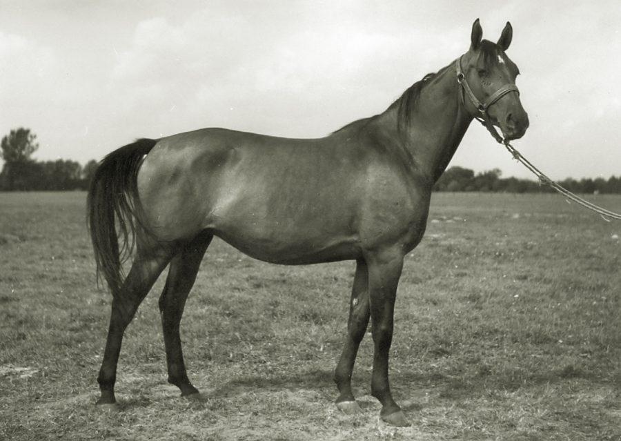kl. Arteria o, ur. 1962