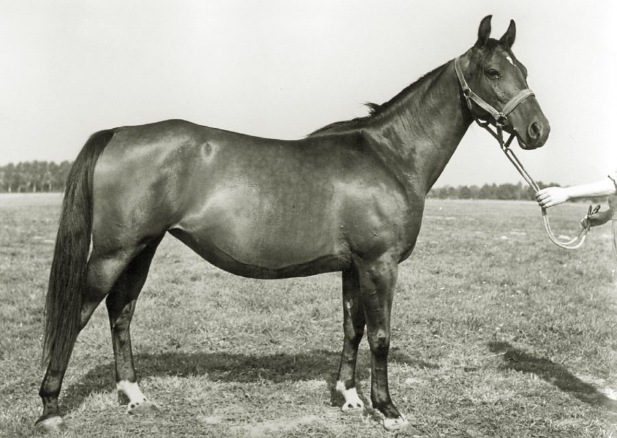 kl. Barwena xo, ur. 1961
