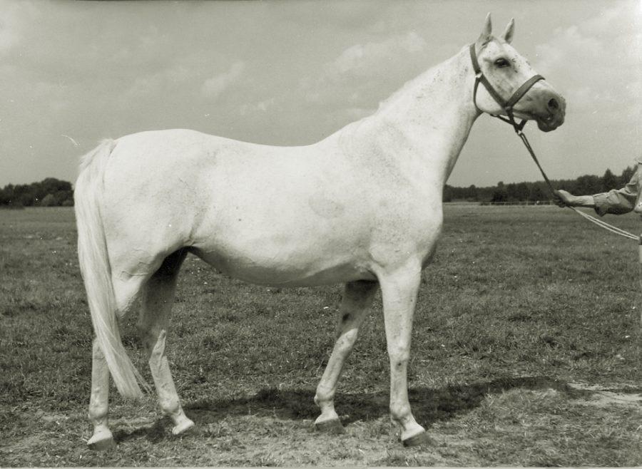kl. Basama xo, ur. 1956
