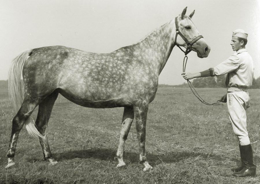 kl. Bastylia xo, ur. 1962
