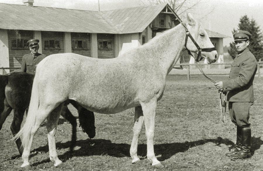 kl. Cartagena o, ur. 1942