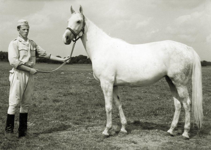 kl. Chryzeida xo, ur. 1961