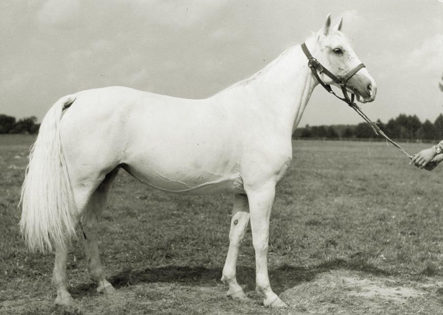 kl. Dewizka xo, ur. 1959