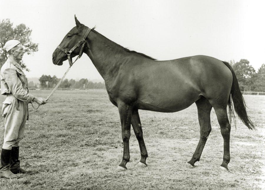 kl. Diorama xo, ur. 1964