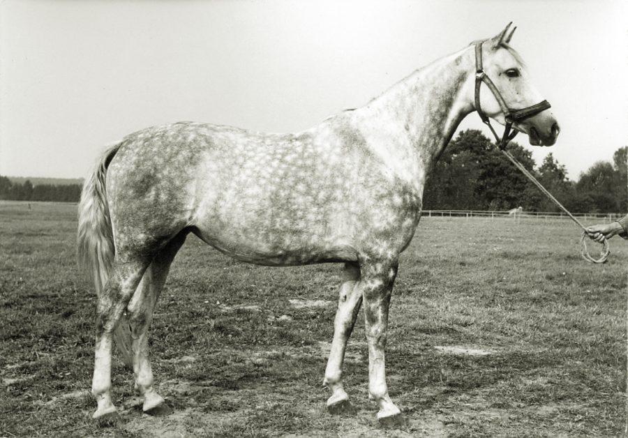 kl. Donna xo, ur. 1962