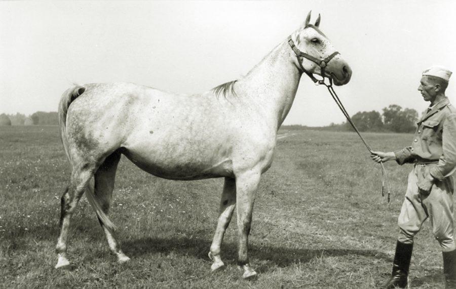 kl. Dorada xo, ur. 1956