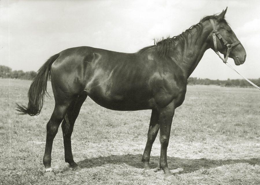 kl. Doria xo, ur. 1963