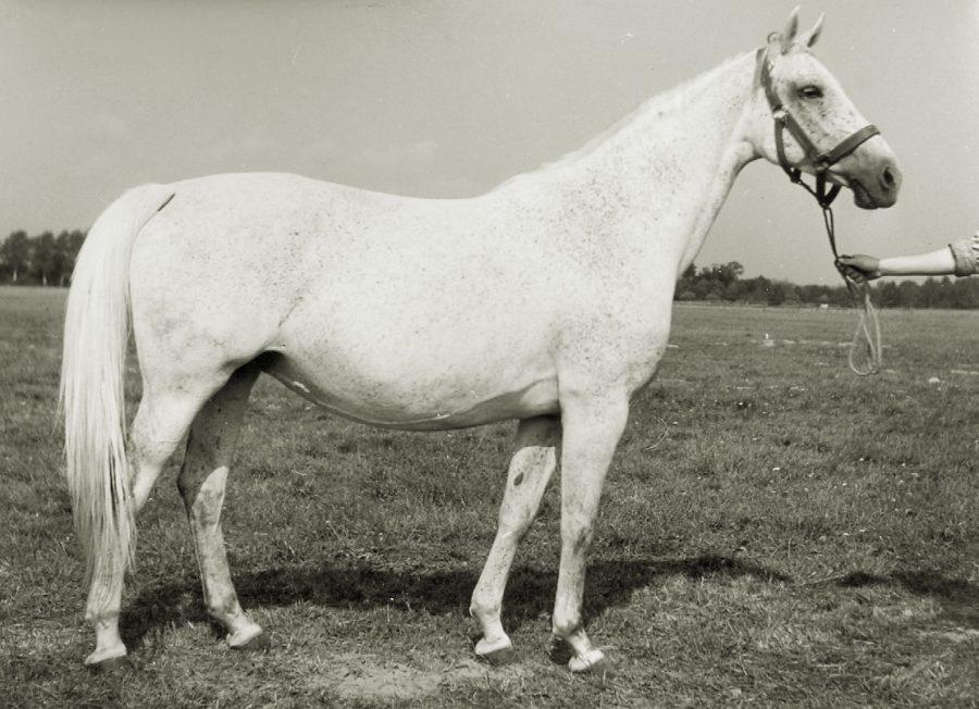 kl. Doris xo, ur. 1958
