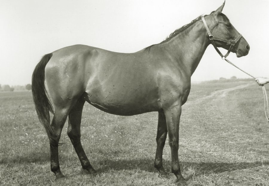 kl. Eora xo, ur. 1957