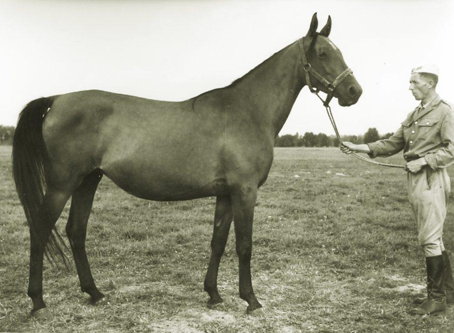 kl. Etna xo, ur. 1960