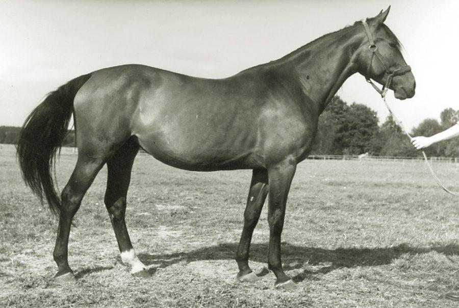 kl. Fara xo, ur. 1963
