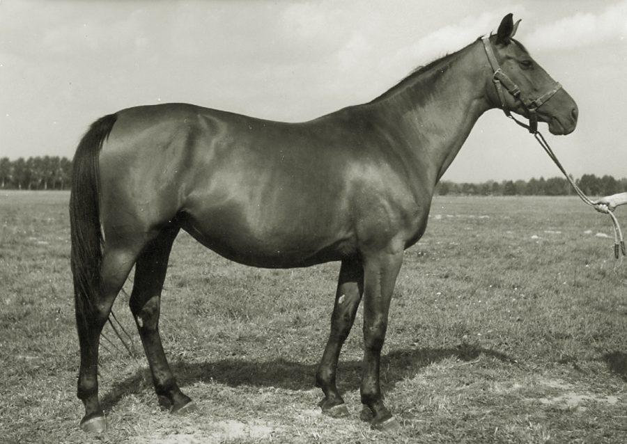kl. Finezja xo, ur.1957