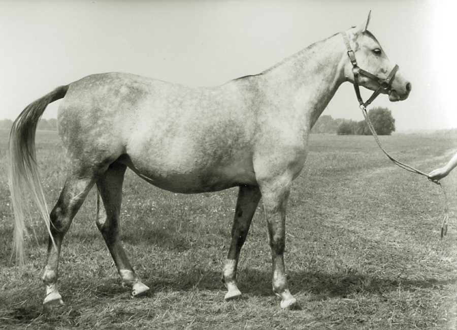kl. Forma xo m., ur. 1959