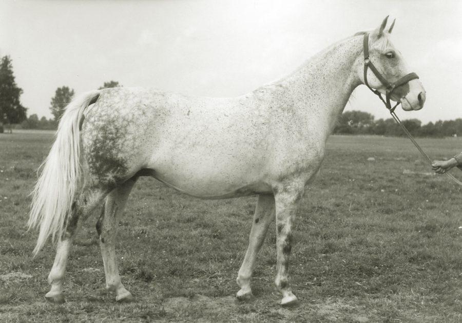 kl. Higiena xo, ur. 1958