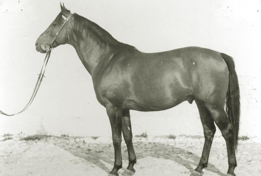 og. Artel xo, ur. 1961
