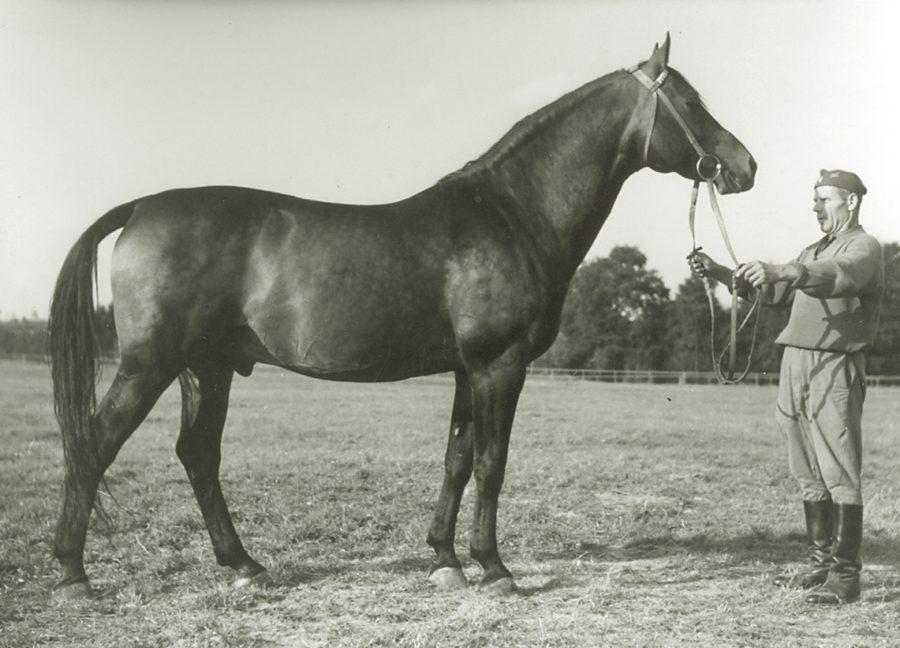 og. Czatownik xo, ur. 1957