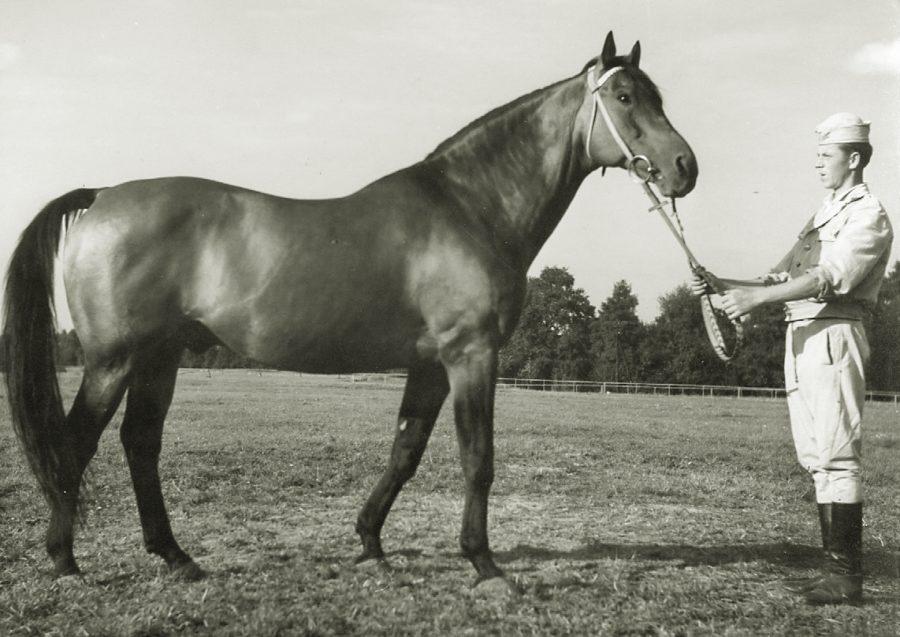 og. Gniewny xo, ur. 1952