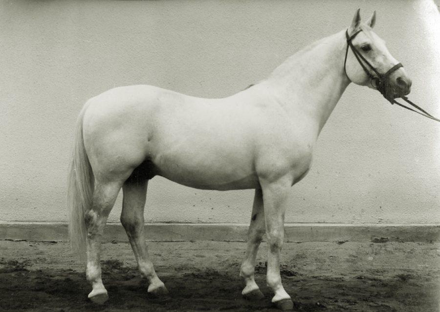 og. Kask xo, ur. 1955