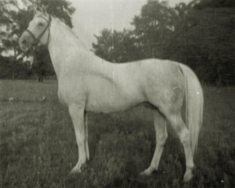 og. Kiejstut xo, ur. 1926