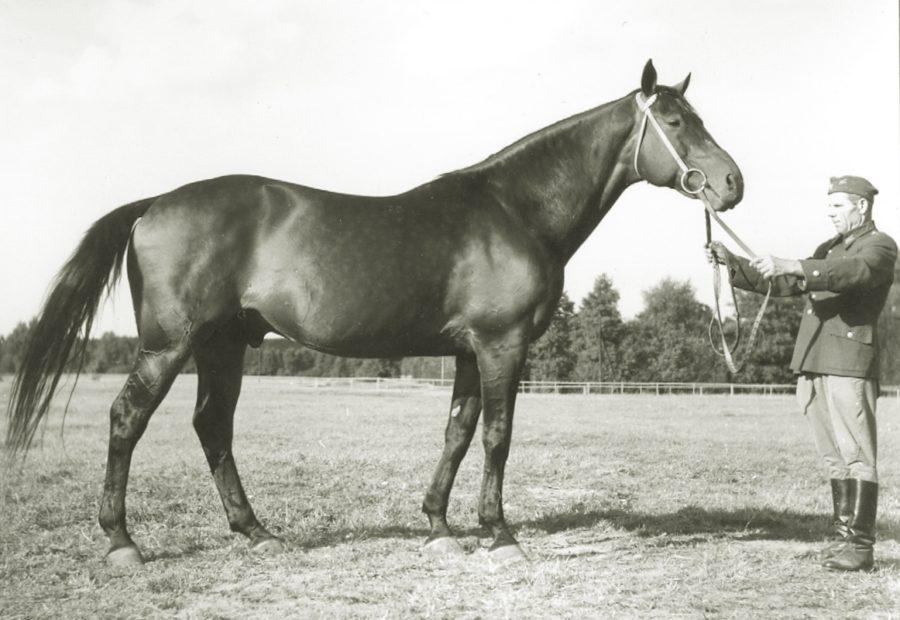 og. Marten xxoo, ur. 1952