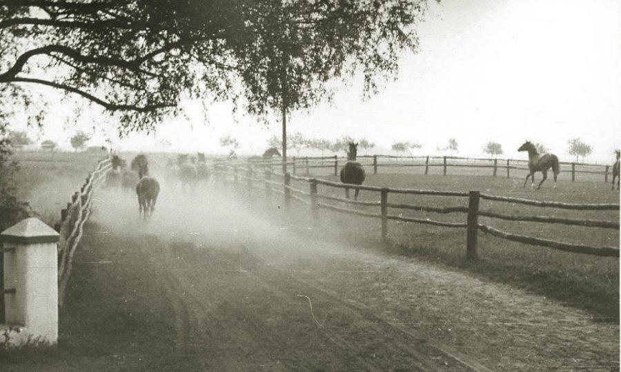 Droga na pastwiska