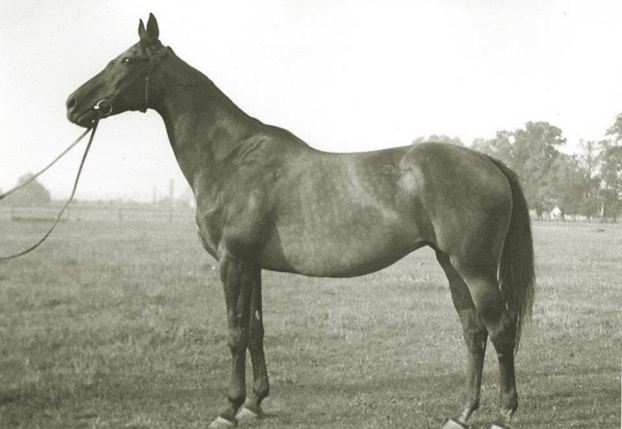 Kl. Carolea xx, sk.gn., ur. 1945