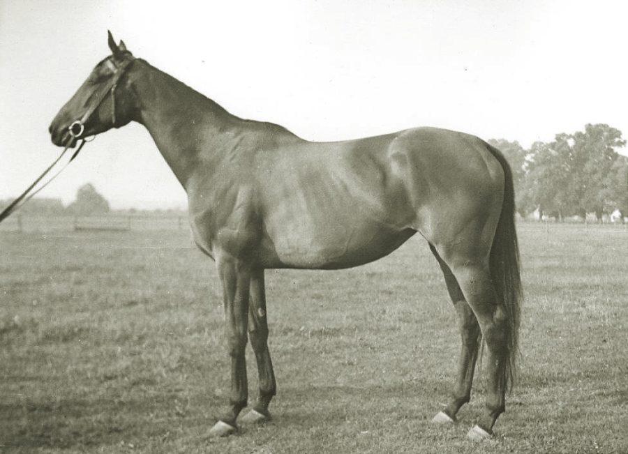 Kl. Carissima xx, gn., ur. 1955