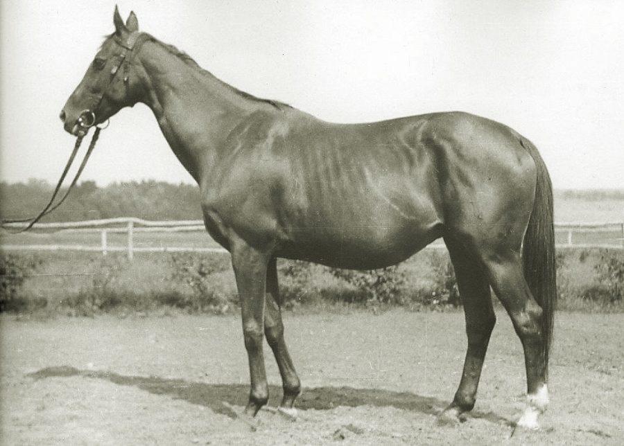 Kl. Oranżada xx, kaszt., ur. 1941