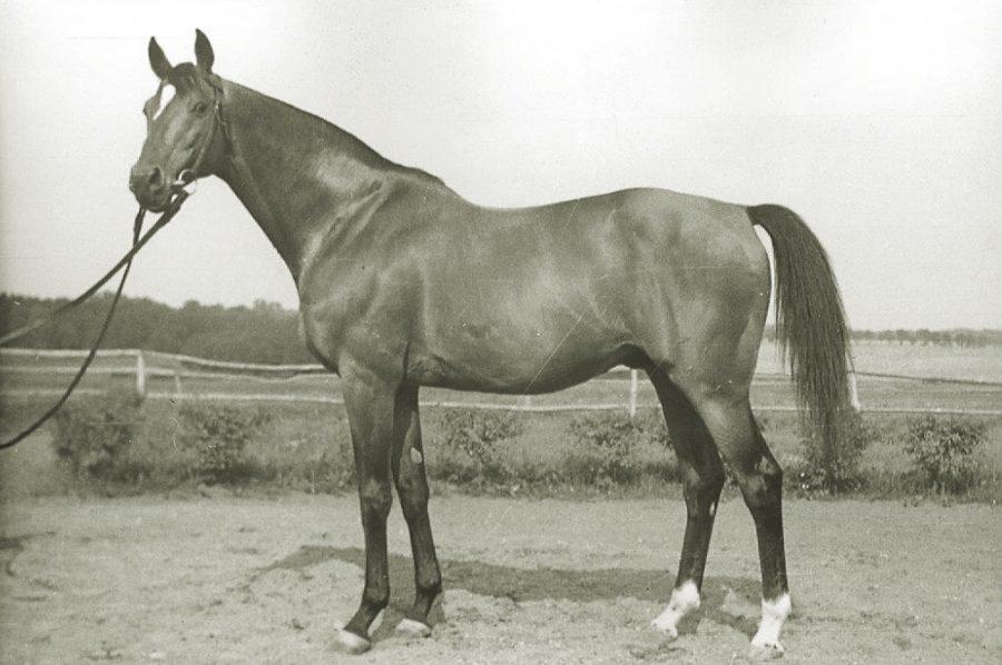 Og. Aquino xx, gn., ur. 1948