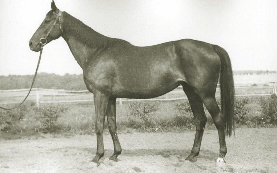 Kl. Hiroszima xx, sk.gn., ur. 1944