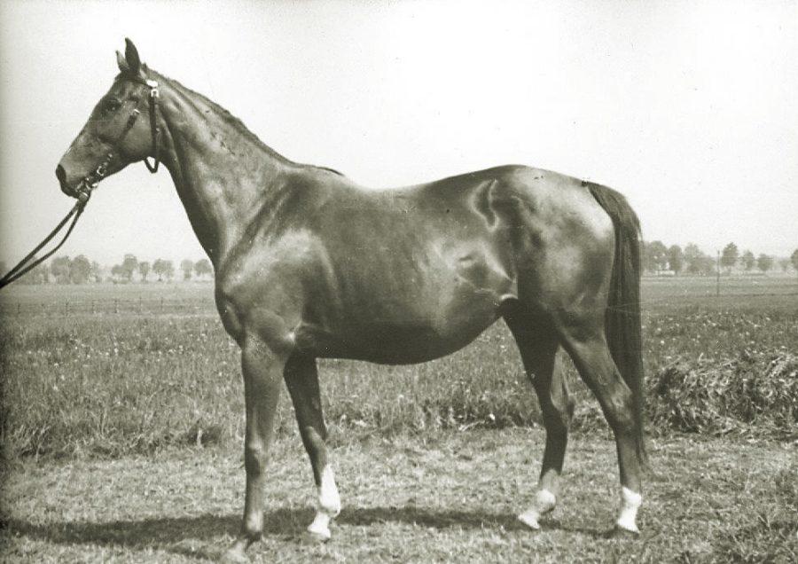Kl. Cytryna xx, kaszt., ur. 1949