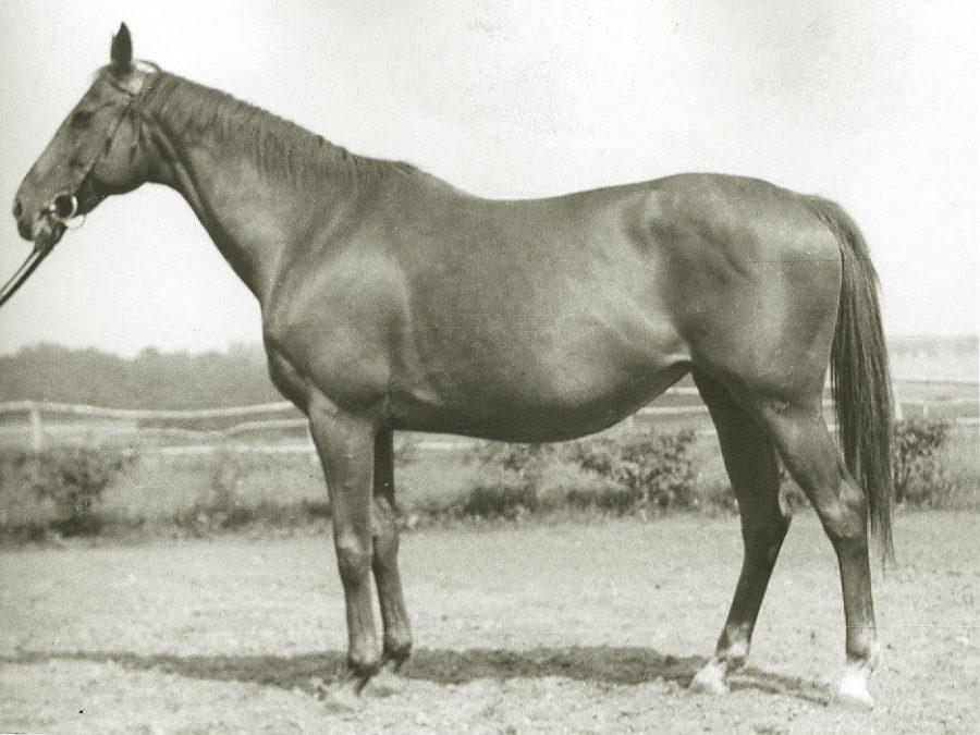 Kl. Depas xx, kaszt., ur. 1942