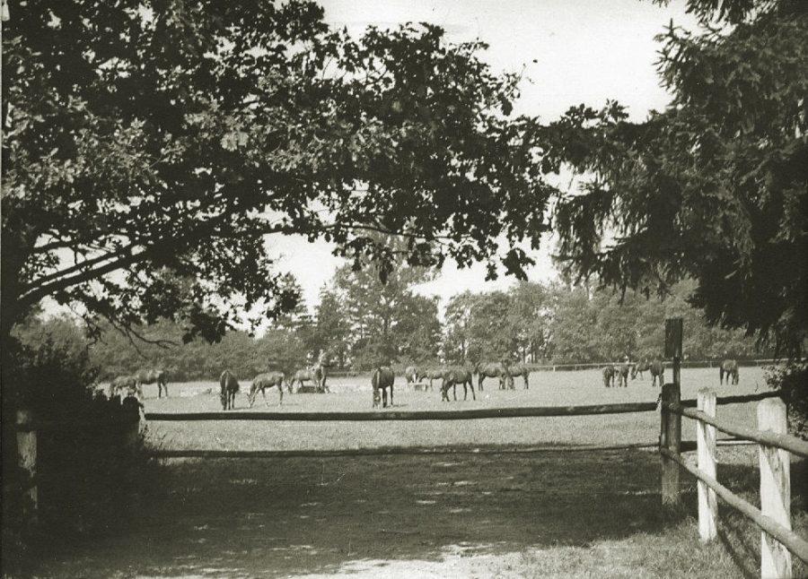 Klacze na pastwisku w parku