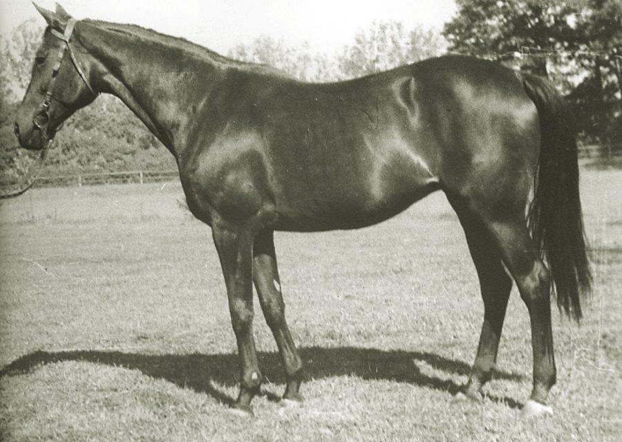 Kl. Ottilia xx, c.gn., ur.1943
