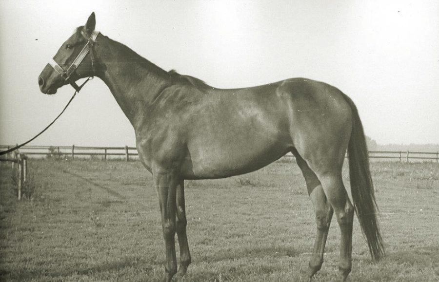 Kl. Nutria xx, c.gn., ur.1955
