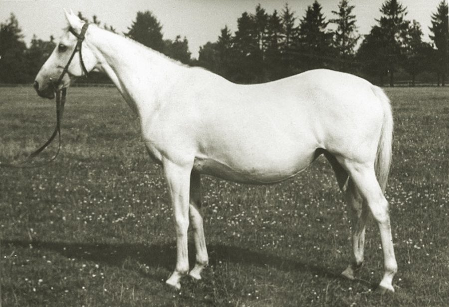 Kl. Miss Victory xx, siwa, ur.1945