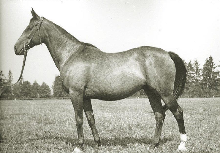 Kl. Liryka xx, gn., ur.1947
