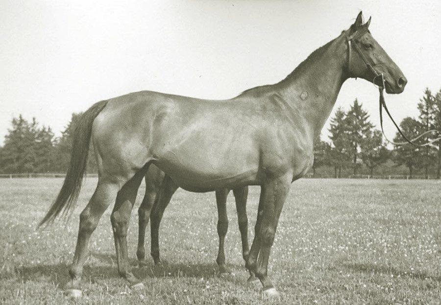Kl. Datura xx, gn., ur.1950