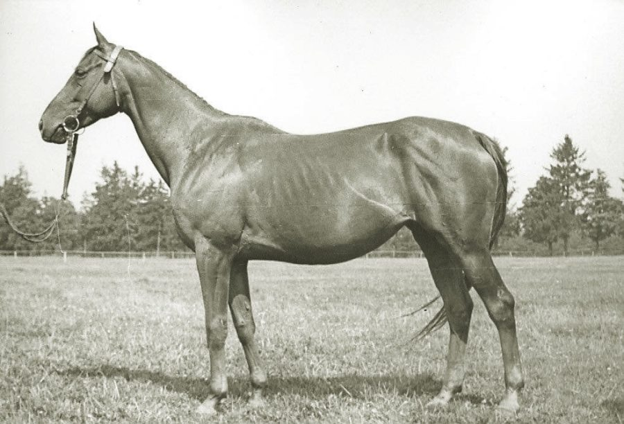 Kl. Sycylia xx, kaszt., ur.1953