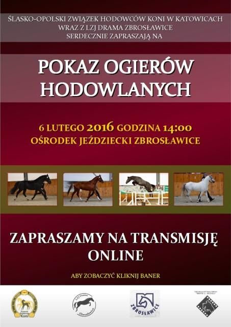 Pokaz ogierów hodowlanych Zbrosławice