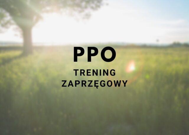 Wyniki kwalifikacji ogierów śląskich do PP zaprzęgowej