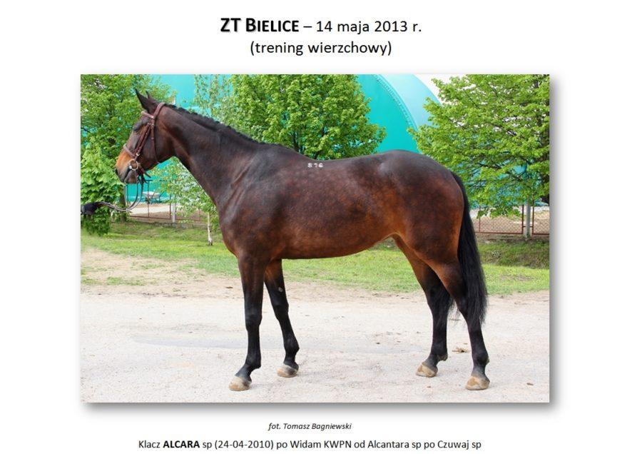 ZT BIELICE (trening wierzchowy) – 14 maja 2013 r.