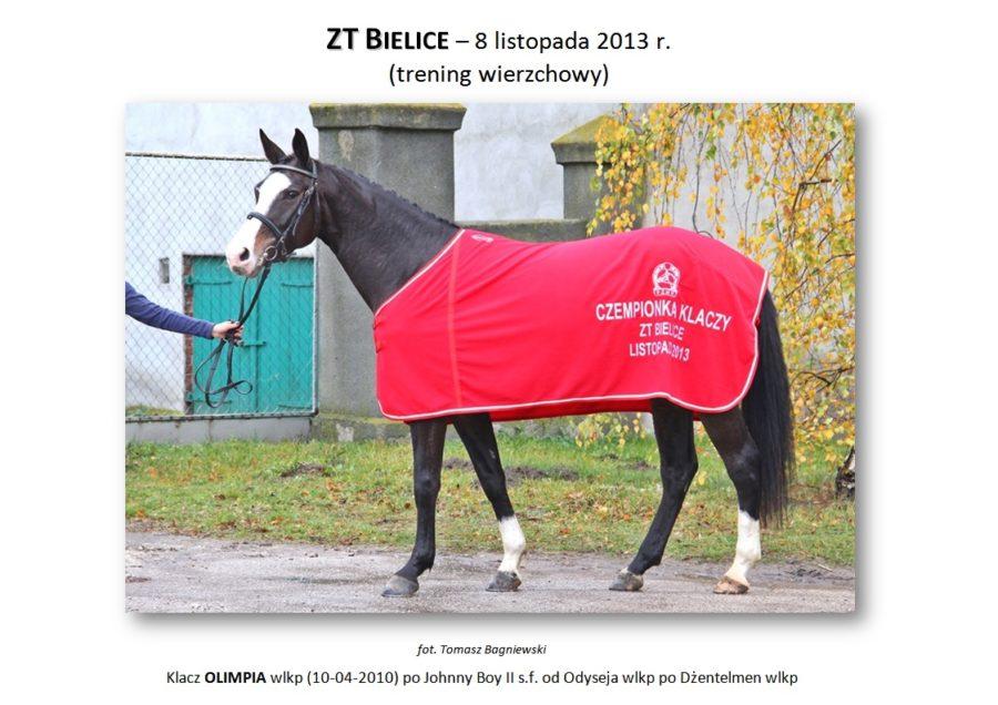 ZT BIELICE (trening wierzchowy) – 8 listopada 2013 r.
